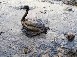 oil duck